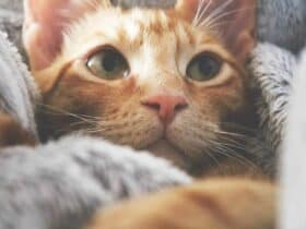 what-is-toxoplasmosis